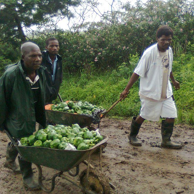 livelihoods-economic-development-01